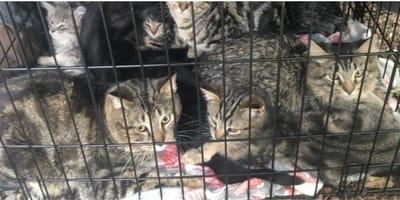 Gabbia con gatti vicino al fiume: rabbia dei volontari per un dettaglio