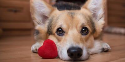 Cos'è il soffio al cuore nel cane e come aiutare Fido?