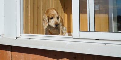 Hund aus Hochhaus geworfen: Begründung schockiert polnische Polizei