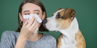 Corona-Spürhunde: Schnüffeln, bis der Arzt kommt