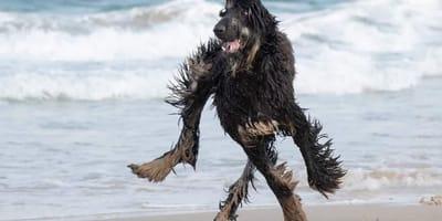 Raar maar waar: kun jij zien welke kant de poten van deze hond opgaan?