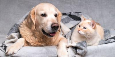5 razze di cani adatti ai gatti (Foto)