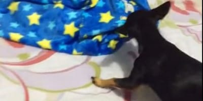 Bimba dorme e il cane prende la coperta: la madre è allibita (Video)