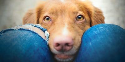 Experiment: Können Hunde unsere Gedanken lesen?