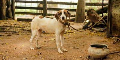 Cosa dice la legge sul maltrattamento di animali?