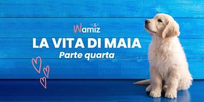 Storie di Cani: La Vita di Maia - Parte IV