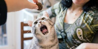 I gatti possono mangiare le castagne?