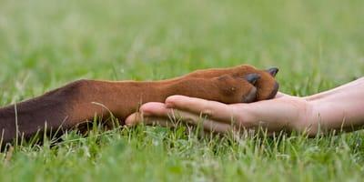 Zwierzę czuje, zwierzę cierpi. Prawa zwierząt w Polsce