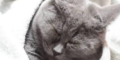 Trova un gatto nel suo giardino: la particolarità è evidente (Video)