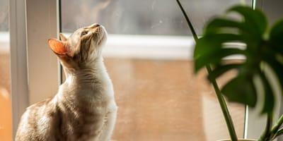 Uważaj: ta popularna roślina doniczkowa jest trująca dla kota