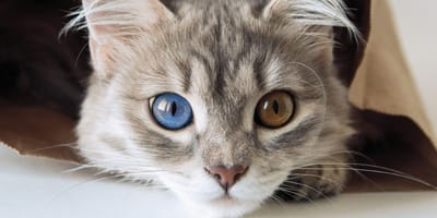 Cose da sapere sui gatti: astuzie beauty per Micio