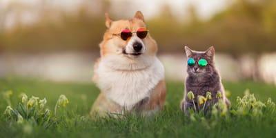 No, partire in vacanza con il cane o il gatto non è complicato! Ecco perché