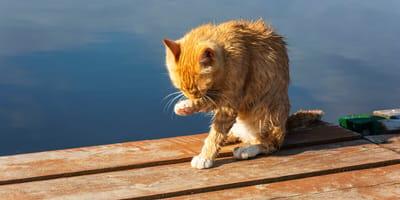 Türken retten rotes Kätzchen vorm Ertrinken: Als sie sich umdrehen, trifft sie der Schlag!