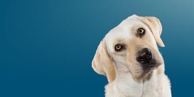 Perché il pelo del cane cambia colore? Cause e trattamenti