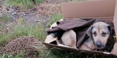 Kobieta znajduje karton porzucony w lesie pod Sochaczewem: w środku widok, który łamie serce