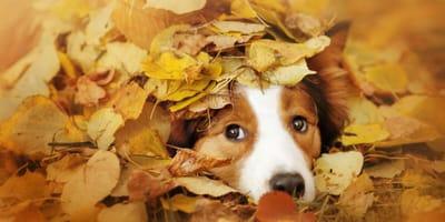Perros en otoño: 5 consejos importantes para cuidar su salud
