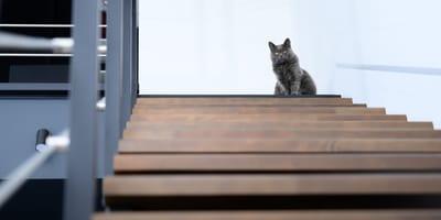 Katze lockt Frau in Keller: Sie kann nur noch laut schreien!