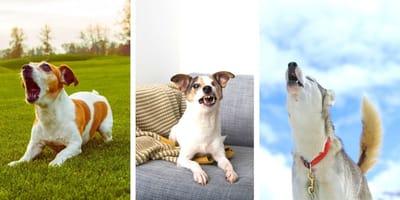 I versi del cane e il loro significato