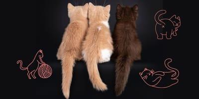 Staarten van katten