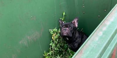 Sie finden eine Bulldogge im Biomüll und ahnen nicht, dass es erst der Anfang ist