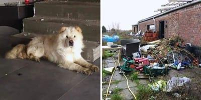 Koppel uit Aalst laat hond uithongeren na scheiding: ze staan nu voor de rechtbank