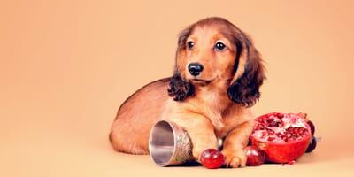 ¿Los perros pueden comer granada?
