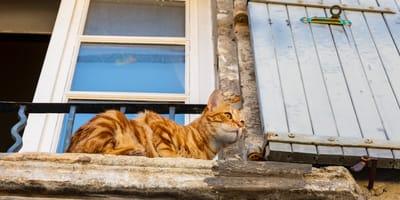 Altersheim für Katzen an der Cote d'Azur eröffnet