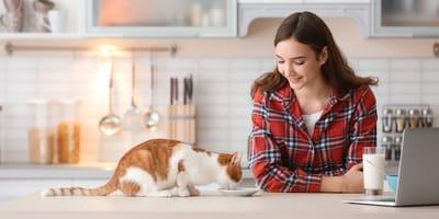 Alimentazione casalinga per gatti: cuccioli, adulti o malati
