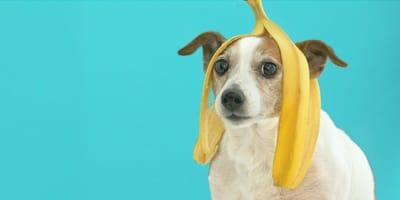 ¿Le puedo dar plátano a mi perro?
