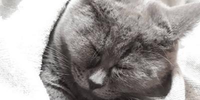Kobieta znalazła kota w ogródku: kiedy na nią popatrzył, nie mogła powstrzymać śmiechu (wideo)