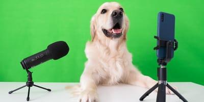 'Petfluencers' - 10 mascotas chilenas populares en redes sociales