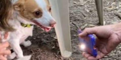 Porta il suo cane al parco: lo vede tremante e corre dal veterinario (Video)