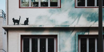 Two black cats on a roof