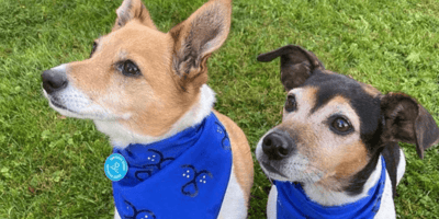 Royal couple encourage people to rescue by sharing photos of their Battersea pets