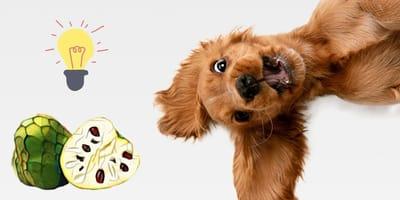 ¿Los perros pueden comer chirimoya?