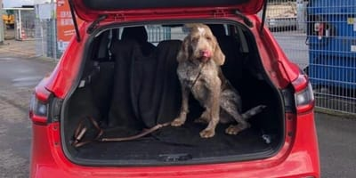 Hond Buddy ontvoert door camperdieven: dankzij social media weer terecht