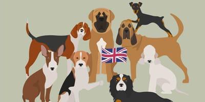 Engelse hondenrassen: van Airedale tot Yorkie