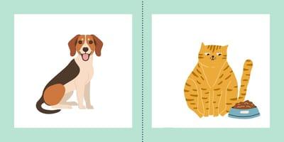 Le 5 principali differenze tra cani e gatti