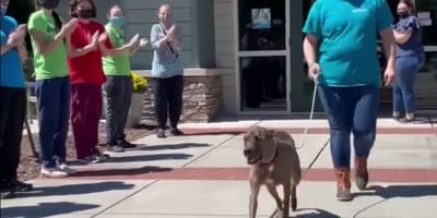 Dog getting standing ovation