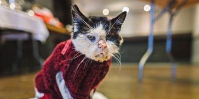 Katze muss bald sterben: Dann tut sie etwas, das die Menschheit weinen lässt!