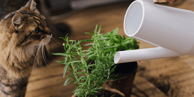 25 houseplants that are safe for cats