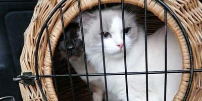 Tierheim findet zwei Katzen, doch im Korb wartet noch eine böse Überraschung
