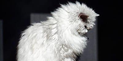 Powiedzieć, że ten kot przeraża, to mało. Przygotuj się na spojrzenie Bazyliszka (wideo)