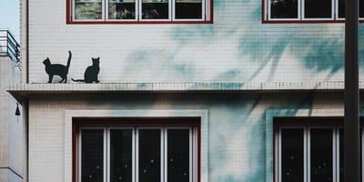 Er sieht Katzen beim Nachbarn, bemerkt etwas und ruft sofort die Behörden an!