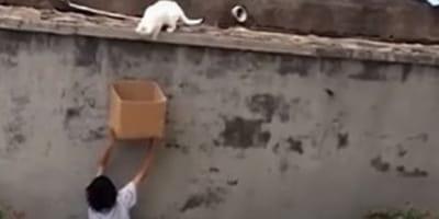 Una scatola di cartone ha cambiato la sorte di questo gatto (Video)