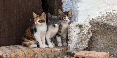 Drie katten gedood na positieve coronatest