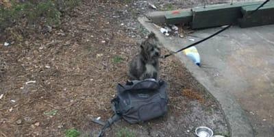 Hund mit Zettel angebunden: Nachricht berührt alle zutiefst