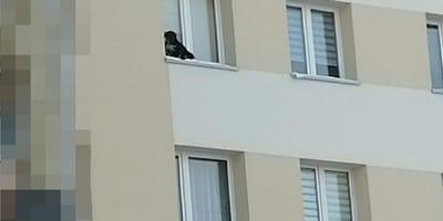 Mieszkaniec Lublina wystawił psa na parapet na 9. piętrze i zamknął okno. Zapadł wyrok