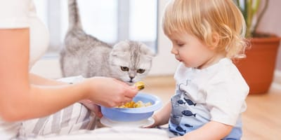 Quante volte deve mangiare un gatto di 2 mesi e cosa?