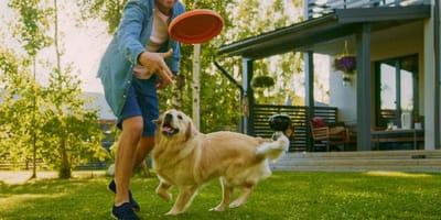 I consigli dell'educatore canino su come giocare con il cane